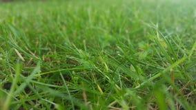 绿草 库存图片