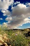 荒地沙漠 免版税库存照片