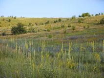 荒地草原,干燥草甸,有花的 太阳发光在领域 免版税库存照片