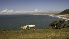 荒野绵羊 免版税库存图片