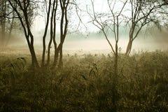 荒野 免版税库存图片