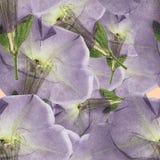 荔枝螺 被按的干燥花无缝的样式纹理  免版税库存图片