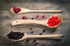 荚莲属的植物、黑醋栗和樱桃在木匙子 库存图片