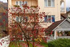 荚莲属的植物房子 库存照片