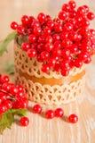 荚莲属的植物红色浆果 免版税图库摄影