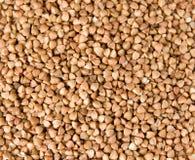 荞麦多个种子 免版税库存图片