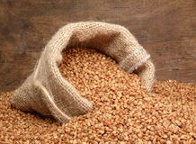 荞麦 免版税库存图片