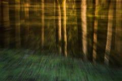 荧光的森林 库存图片
