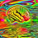 荧光的脑子 库存图片