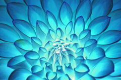 荧光的蓝色花摘要 免版税库存图片