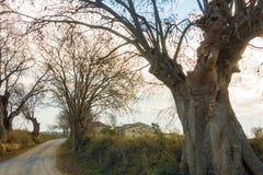荨麻有古老加泰罗尼亚的农夫房子的树胡同 免版税图库摄影