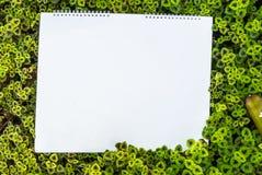 荨麻(锦紫苏)隔绝在白色背景 库存图片