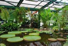 药商的热带植物在莫斯科从事园艺 免版税库存照片