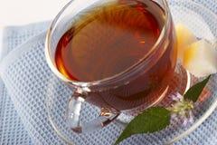 药物草本自然茶 免版税库存照片