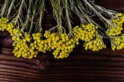 药用植物在木桌上的蜡菊属植物arenarium 顶视图 免版税库存图片