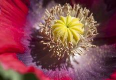 药用植物 图库摄影