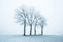 荷兰、风景和磨房冬天 库存照片