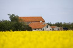 荷兰农场在春天,在voorjaar的het的Nederlandse boerderij 免版税库存照片