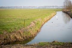 荷兰农田在秋天 免版税库存图片