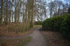 荷兰森林在冬天 免版税图库摄影