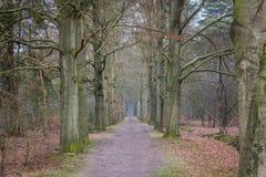 荷兰森林 库存照片