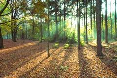 荷兰森林 库存图片