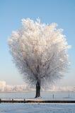 荷兰横向雪 免版税库存图片