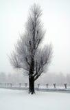 荷兰横向雪 库存照片