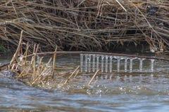 荷兰河冰柱 免版税库存图片