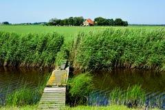 从荷兰海岛阿默兰岛的一个草甸风景 免版税图库摄影
