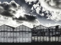 荷兰温室 库存照片