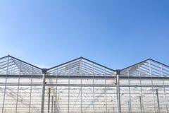 荷兰温室 库存图片