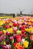 荷兰游人 免版税库存图片