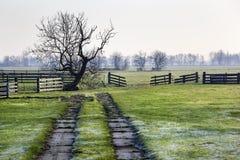 荷兰牧场地风景 免版税库存照片