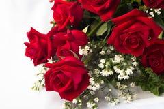 荷兰玫瑰花 库存图片