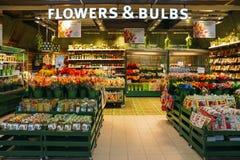 荷兰电灯泡和郁金香待售在阿姆斯特丹` s斯希普霍尔机场 库存图片
