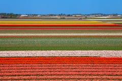 荷兰电灯泡领域 库存图片