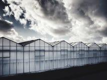 荷兰的温室 免版税库存照片