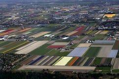 荷兰花和郁金香领域在春天 库存照片