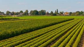 荷兰苗圃结构树 图库摄影