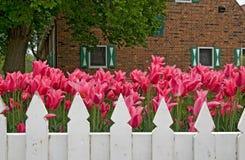 荷兰语庭院春天 免版税库存图片