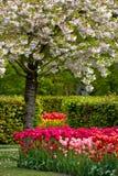 荷兰语庭院荷兰keukenhof春天 免版税图库摄影