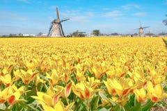 荷兰语横向郁金香风车 免版税库存图片