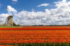 荷兰语横向郁金香风车 库存图片