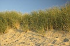 荷兰语的沙丘 图库摄影
