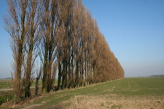 荷兰语风景 免版税库存图片