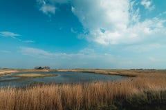 荷兰风景,volgermeerpolder 免版税库存图片