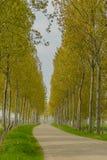 荷兰风景- Heinkenszand -西兰省 免版税库存照片