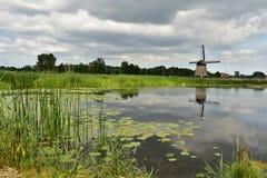 荷兰风车在夏天 图库摄影