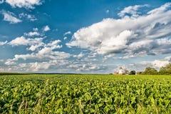 荷兰风车风景 库存图片